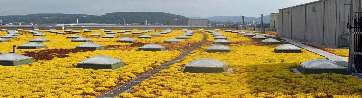 Architecte paysagiste Luxembourg toiture végétale