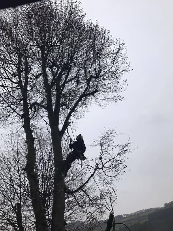 Élagage arbre au Luxembourg 1