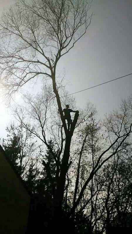 Élagage arbre au Luxembourg 10