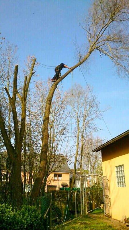Élagage arbre au Luxembourg 11