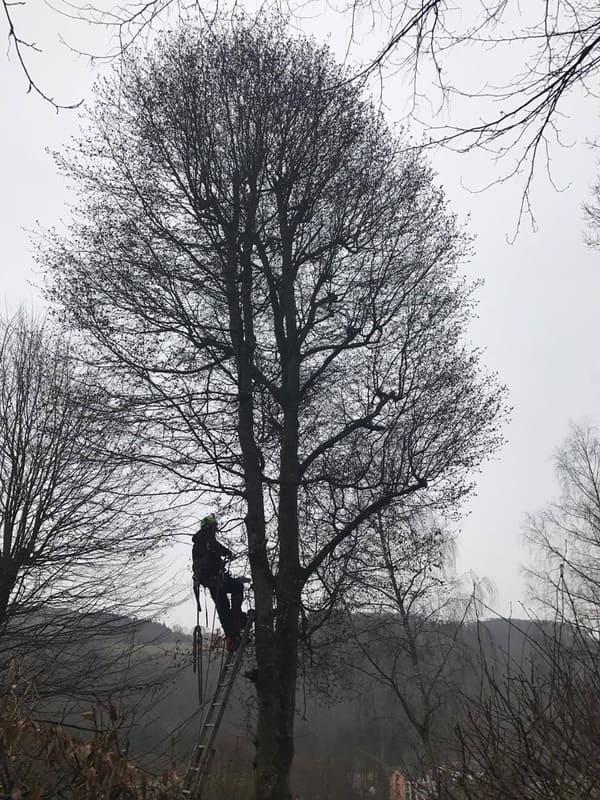Élagage arbre au Luxembourg 2
