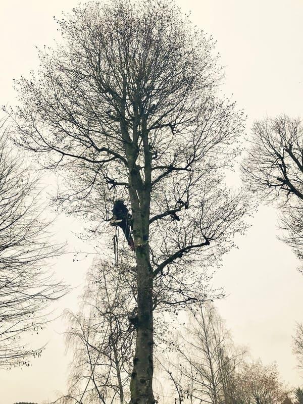 Élagage arbre au Luxembourg 3
