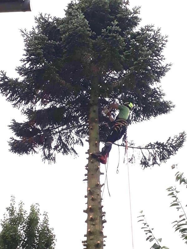 Élagage arbre au Luxembourg 4