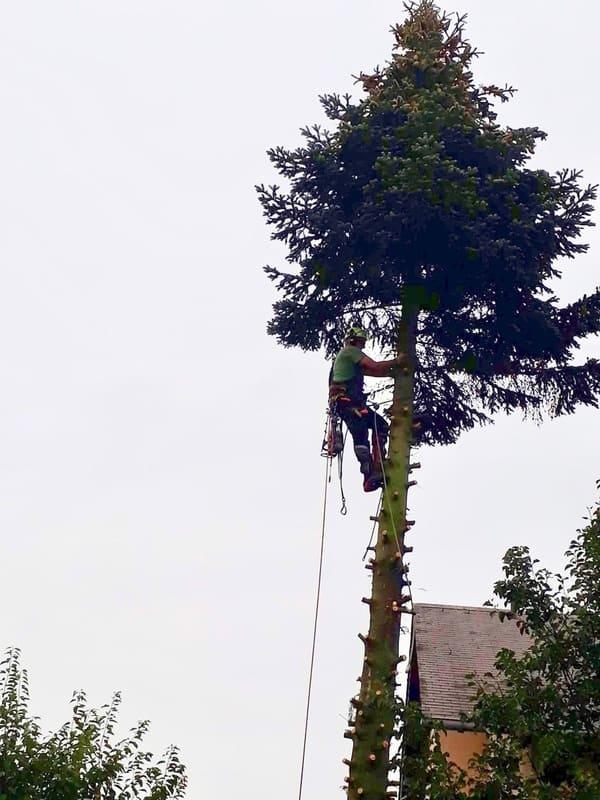 Élagage arbre au Luxembourg 5