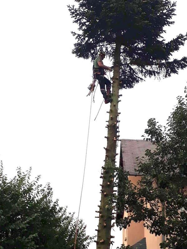 Élagage arbre au Luxembourg 6