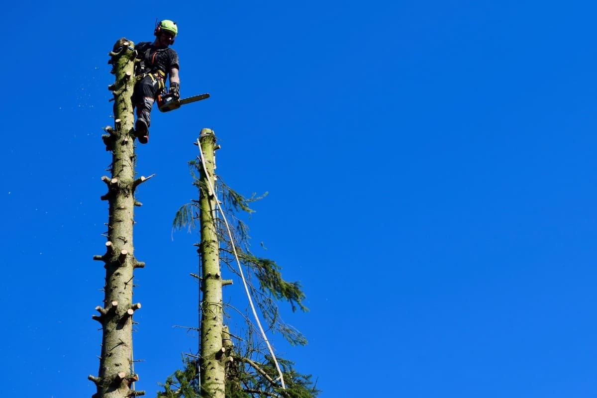 Élagage arbre au Luxembourg 7
