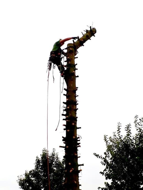 Élagage arbre au Luxembourg 8