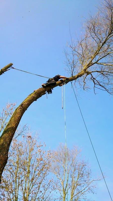 Élagage arbre au Luxembourg 9