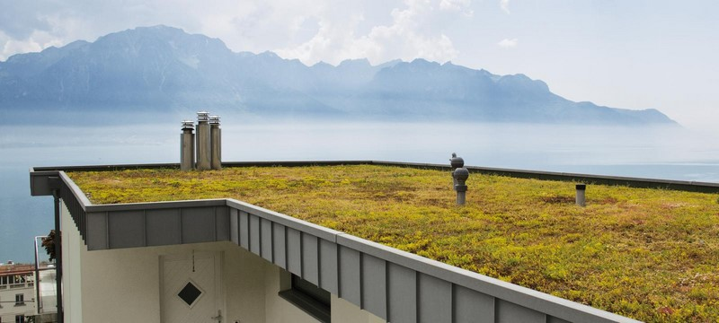 Aménagement extérieur Luxembourg toiture végétale 11