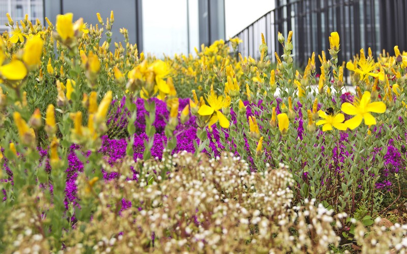 Aménagement extérieur Luxembourg toiture végétale 12