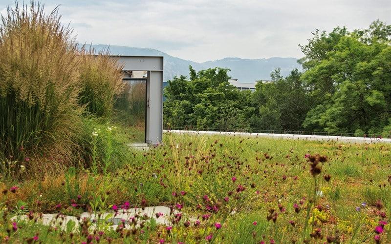Aménagement extérieur Luxembourg toiture végétale 4