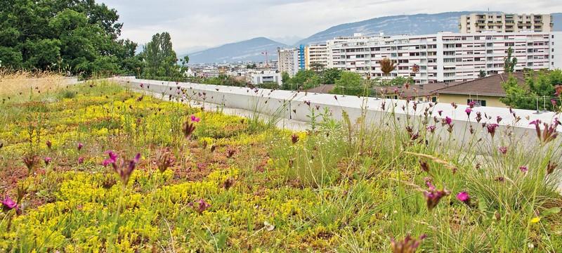 Aménagement extérieur Luxembourg toiture végétale 5