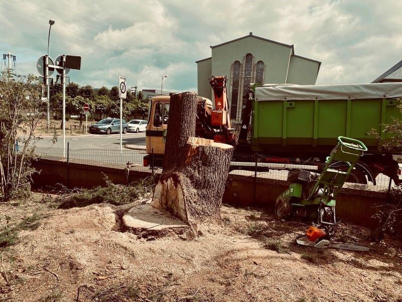 Élagage arbre au Luxembourg