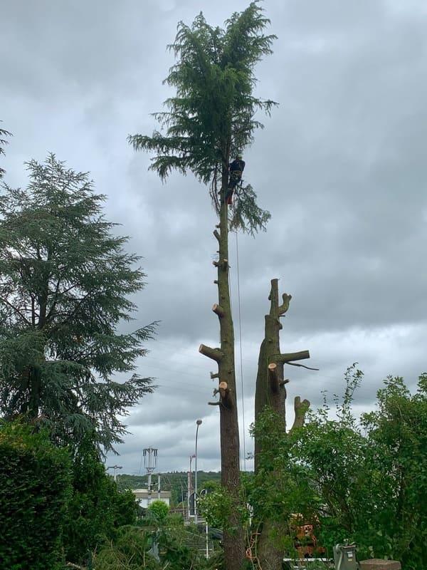 Élagage d'arbres au Luxembourg