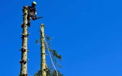 Quelle est la différence entre élagage et abattage d'arbres ?