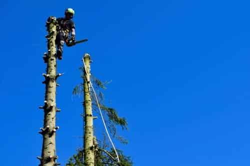 Elagage arbres Spellini