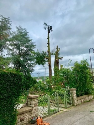 Élagage arbres Luxembourg