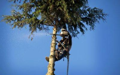 Quel tarif pour l'élagage ou l'abattage de vos arbres ?