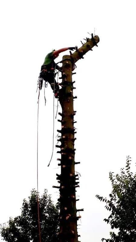 Elagage et abattage d'arbres - Spellini
